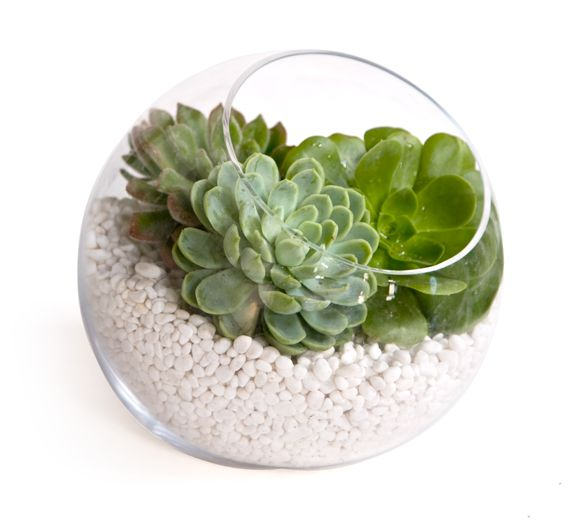 easy-diy-centerpiece-idea-green-succulents-in-clear-zen-vase