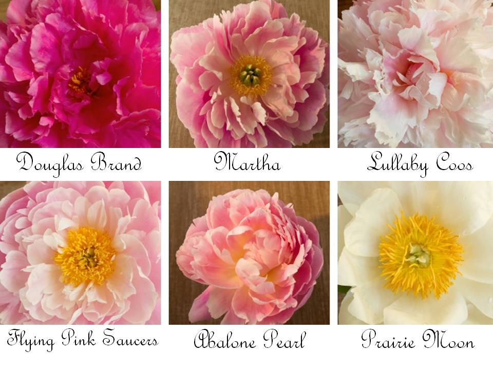 Romantic wedding flowers peonies in shades of ivory pink coral