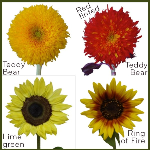 Different types of sunflowers for your wedding
