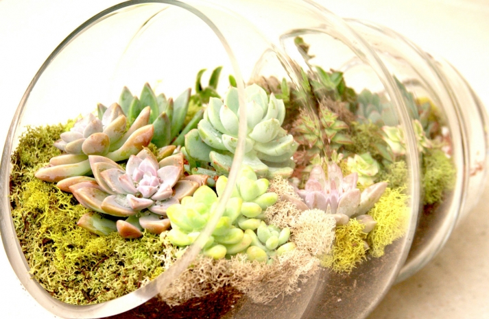 simple wedding centerpieces for a handcrafted wedding glass shell terrarium