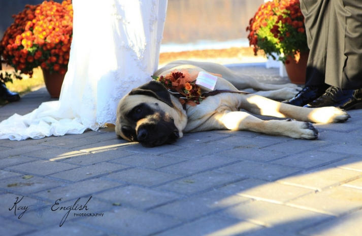 handmade wedding finds for fall weddings pup ring bearer corsage