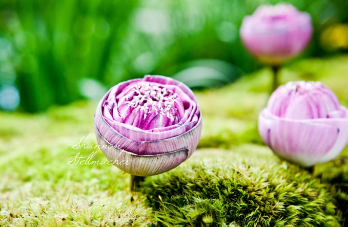Beautiful Pink Wedding Flowers