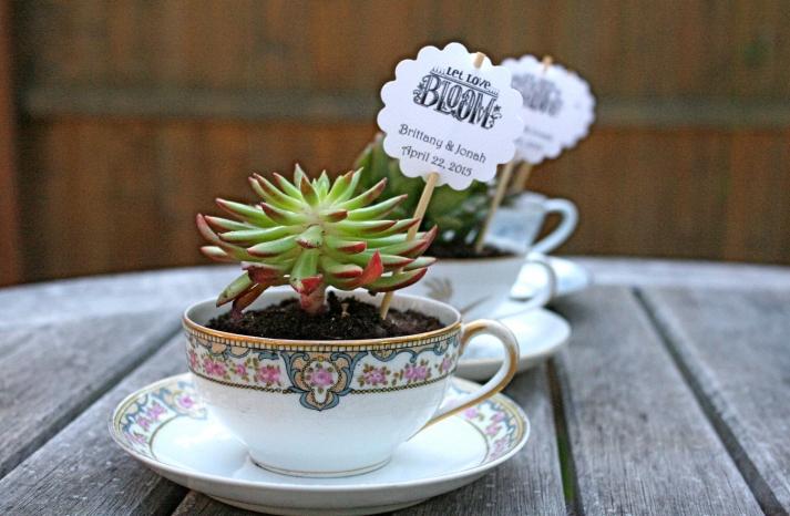 Succulents planted in teacups unique wedding favors