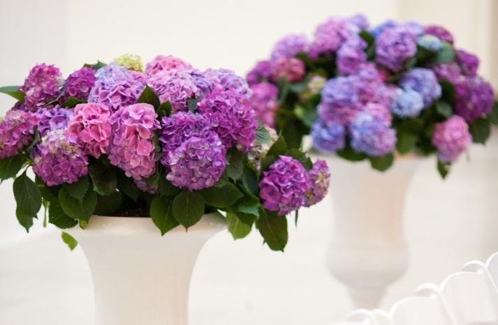 Purple hydgrangeas for wedding ceremony decor