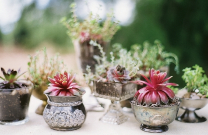 sweet succulents for green weddings 4