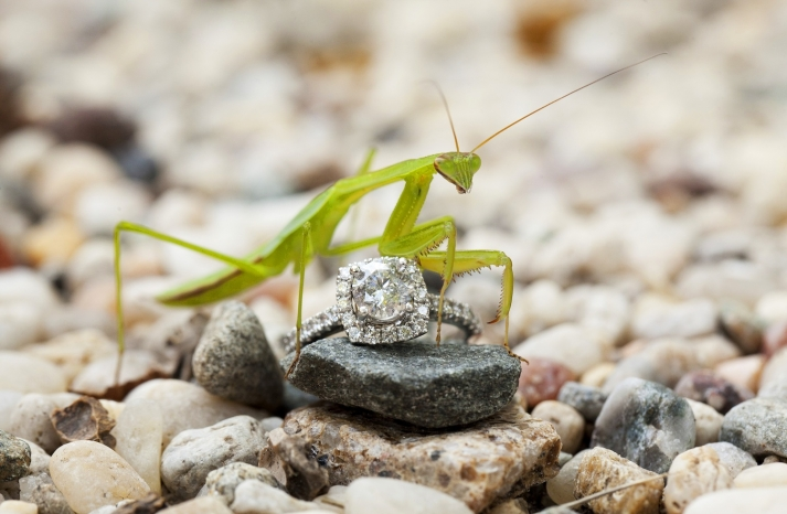 Pray mantis and engagement ring shot