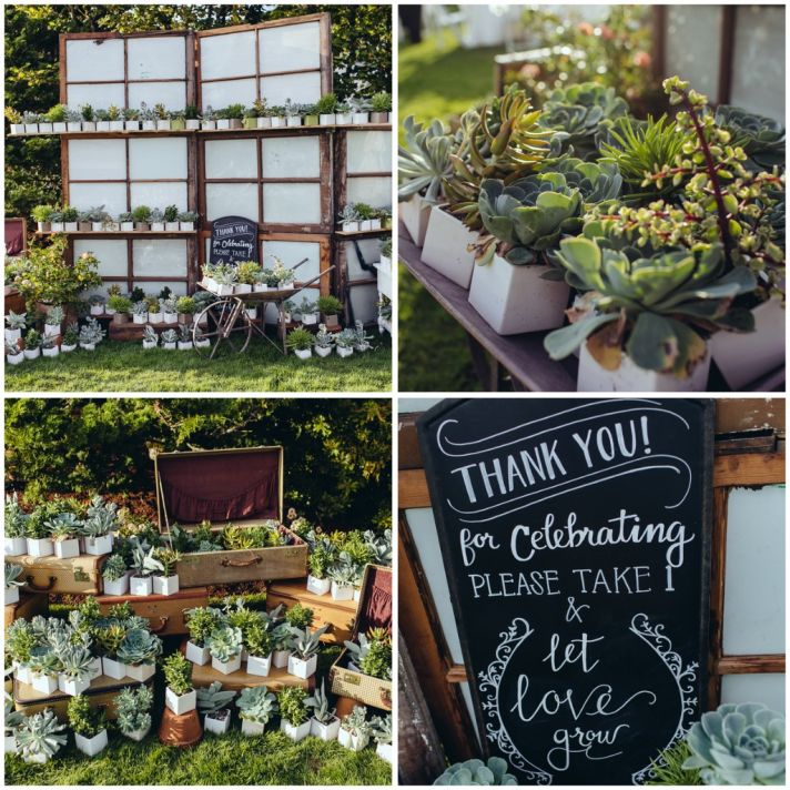 Succulent favor display